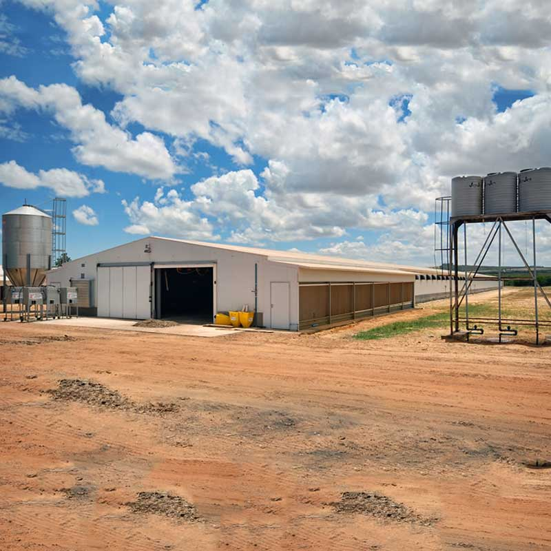 Prefabricated Steel StructurePoultryHouse Chicken FarmShed