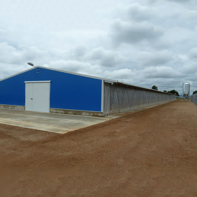 Poultry-Shed-Chicken Farm Building House