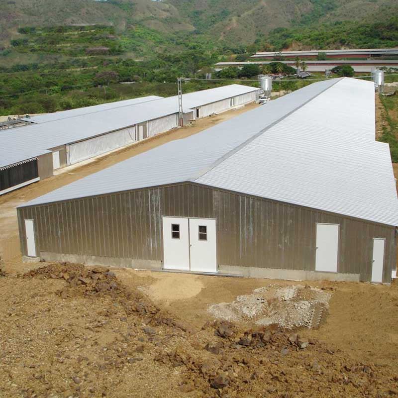 Professional design modular automatical control chickenpoultryshed